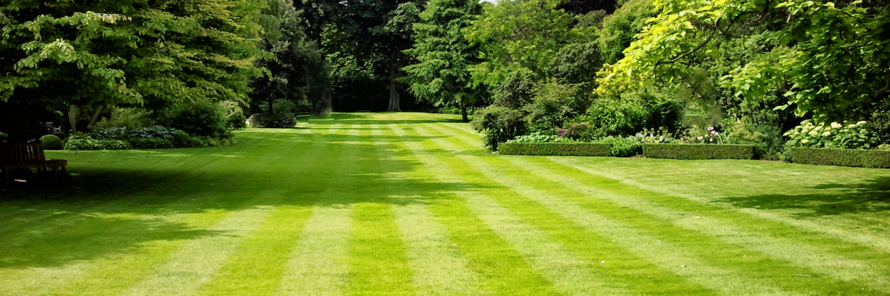 Lawn mowing: 5 top tips for a clean cut