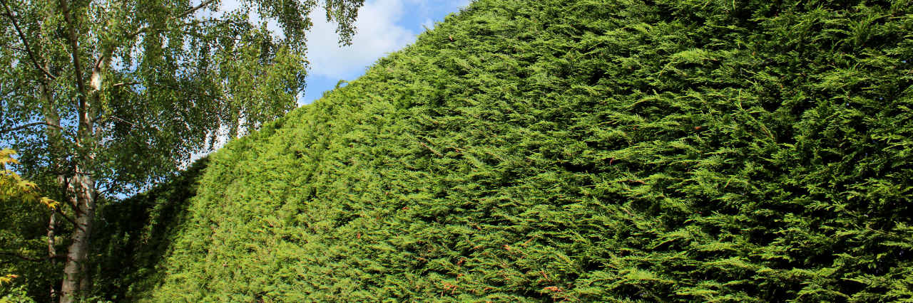 How to trim hedges and bushes: tips and tricks
