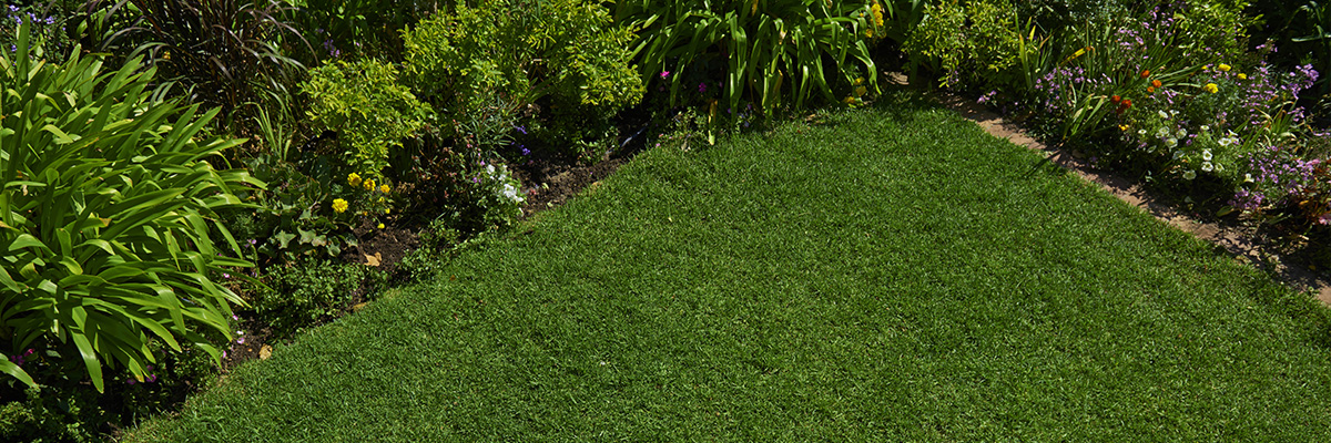 Lawn care tips & advice