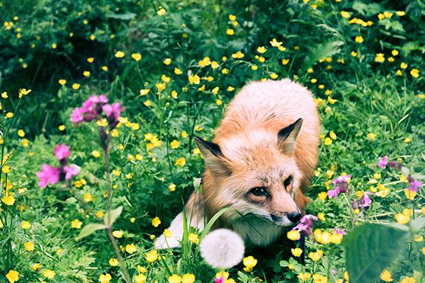 Pet friendly outdoor plants